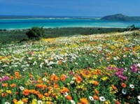 West Coast & Wild Flowers